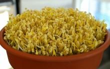 10 อันดับวิธีปลูกผักยอดนิยมช่วงกินเจเลี้ยงง่ายโตไวให้ผลเร็ว