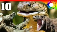 10 อันดับสัตว์เลื้อยคลานที่โคตรอันตราย!!!
