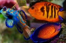 10 อันดับ สุดยอดปลาสวยงามที่สุดในโลก
