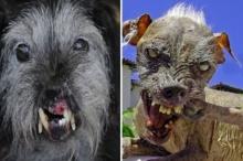 10 อันดับการประกวด น้องหมา ที่มี หน้าตาอัปลักษณ์ มากที่สุดในโลก