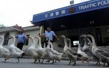 10 เรื่องสุดแปลกชวนอึ้ง!!! ที่มีแค่ในประเทศจีน