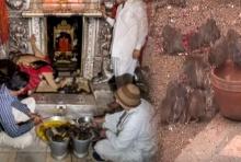 10 อันดับสุดแปลก วิหารบูชาหนูในประเทศอินเดีย